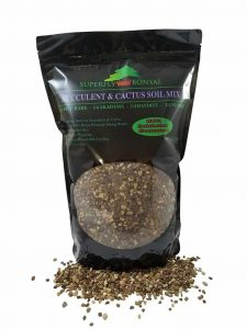 Best Succulent and Cactus Soils