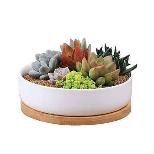 succulent starter pack